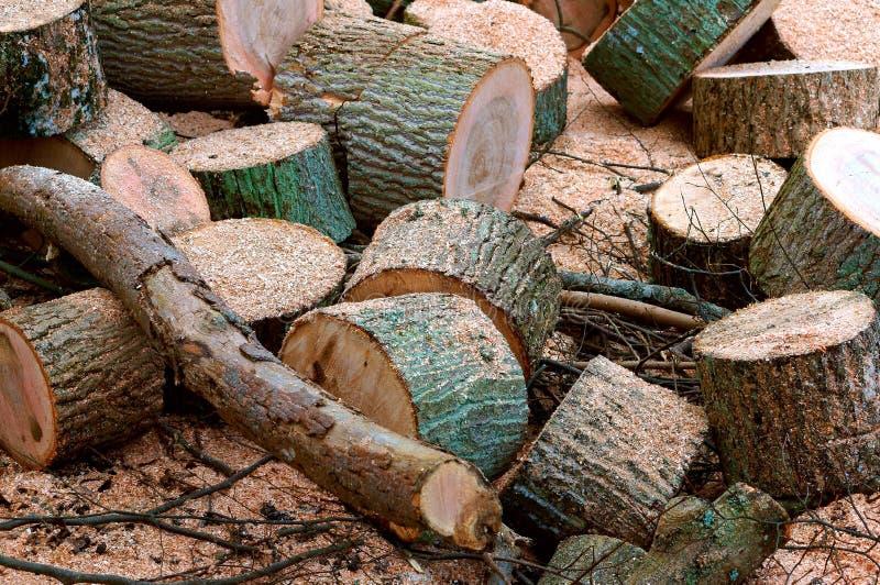 Валить деревья, обезлесение, пни валить деревьев, валили ствол дерева стоковое фото