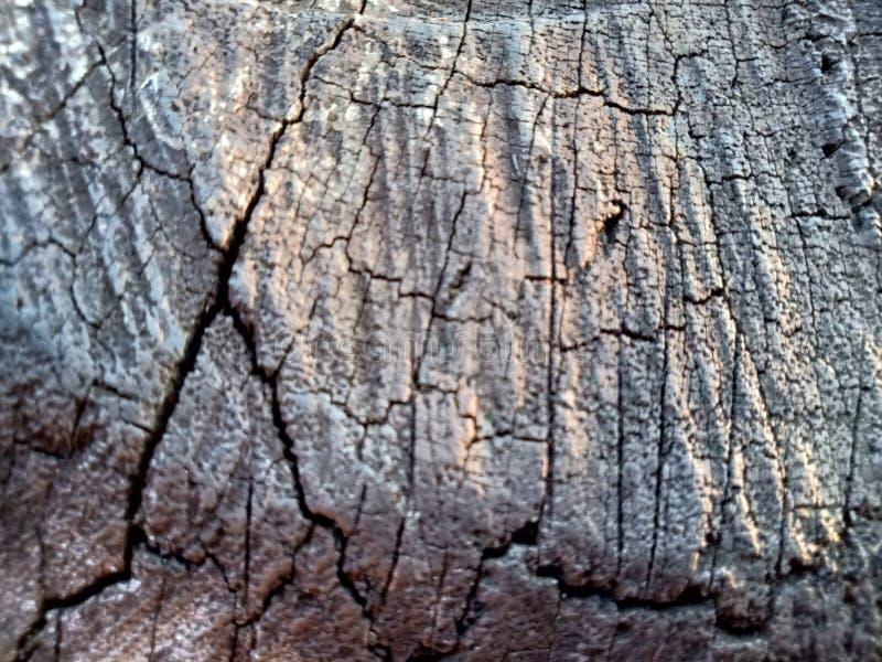 Валить пень дуба - раздел хобота с ежегодными кольцами Древесина куска старого дерева стоковые фотографии rf