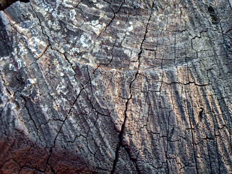 Валить пень дуба - раздел хобота с ежегодными кольцами Древесина куска старого дерева стоковое фото
