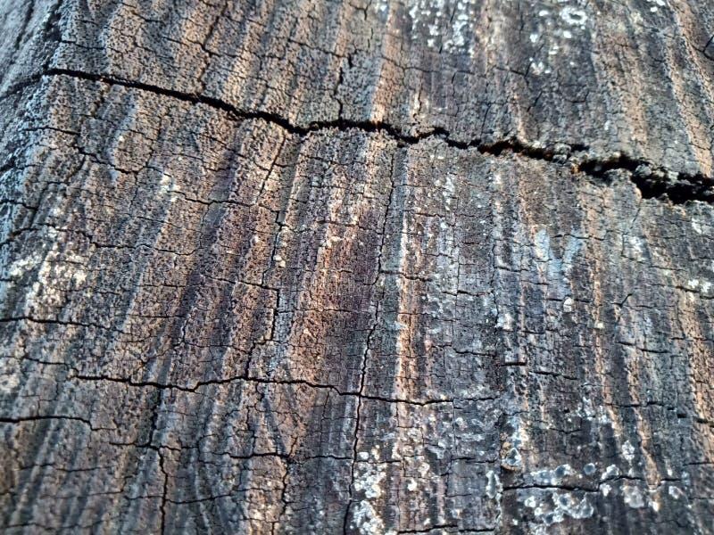 Валить пень дуба - раздел хобота с ежегодными кольцами Древесина куска старого дерева стоковые фото