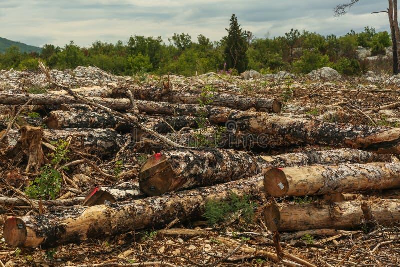 Валка дерева осени стоковые фотографии rf