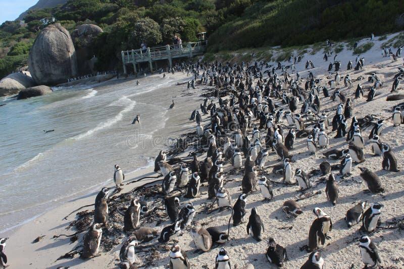Валуны приставают - уникально пляж к берегу пингвина в Кейптауне южном Afric стоковые фотографии rf