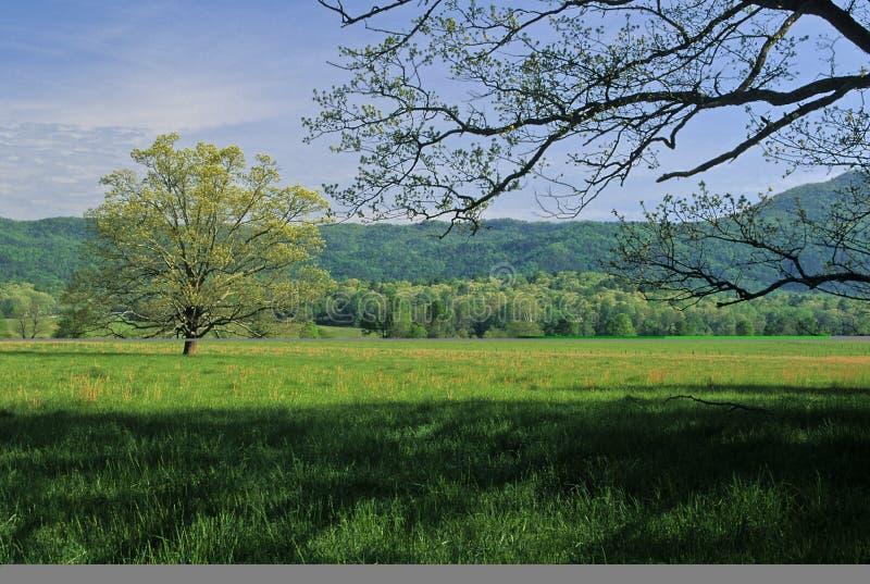 валы весны полей стоковые фото