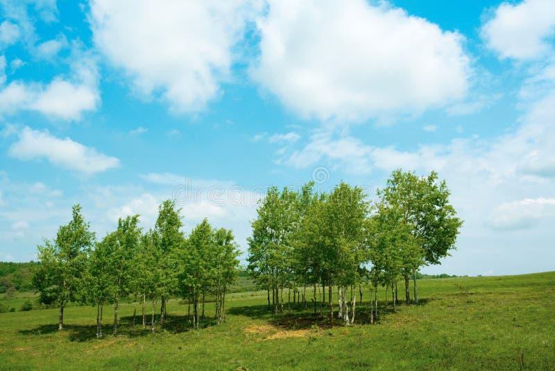 валы весны стоковое изображение