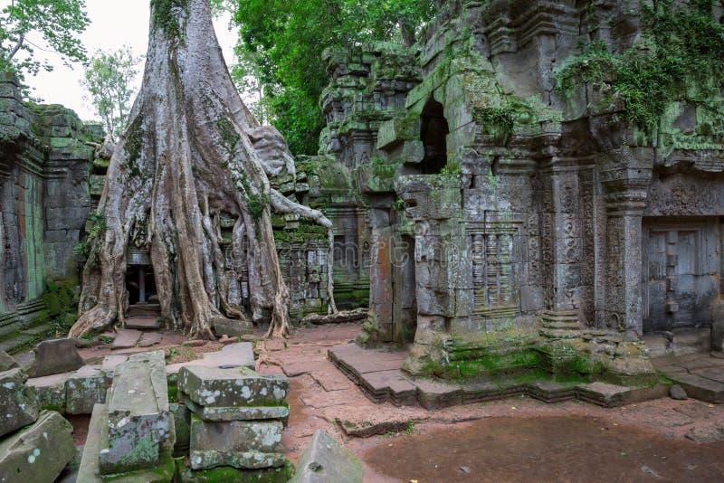 Валы в Ta Prohm, Angkor Wat стоковое изображение rf
