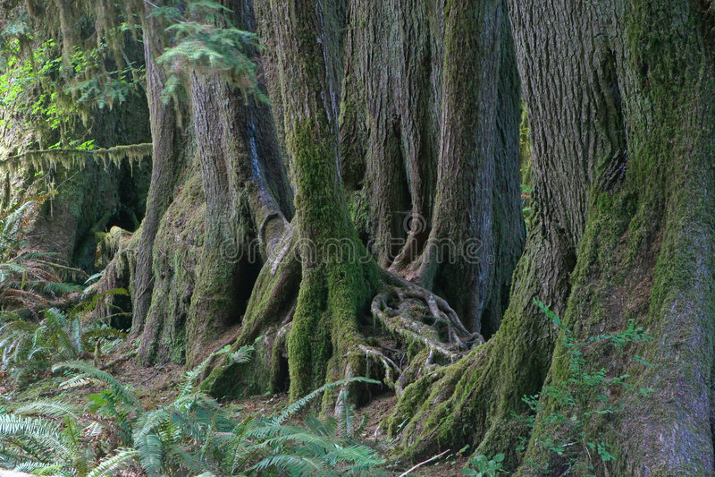 валы дождевого леса стоковые изображения rf