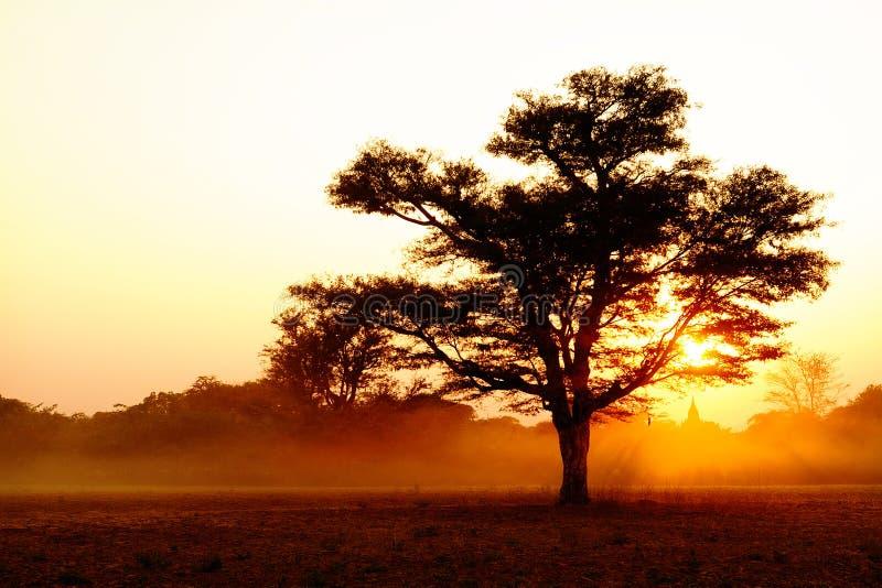 валы захода солнца силуэта стоковые изображения