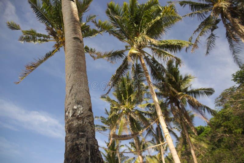 валы ладони пляжа высокорослые стоковые фото
