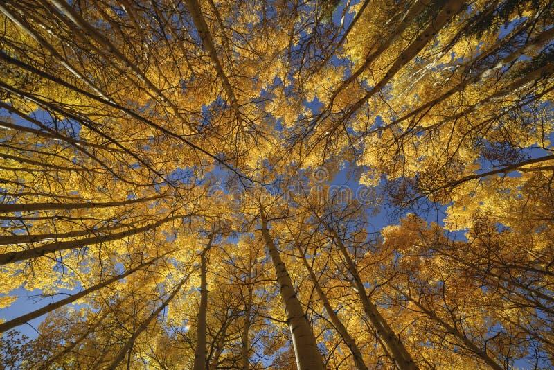 валы падения цвета осины стоковое фото