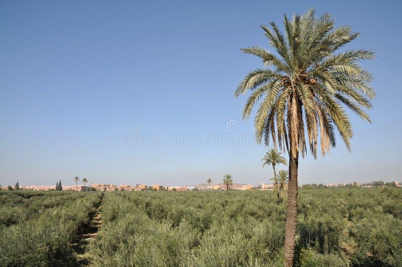 валы прованской плантации marrakech стоковая фотография rf