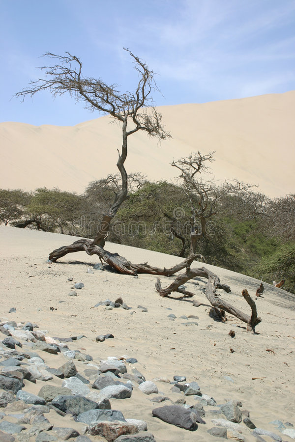 валы пустыни стоковое изображение rf
