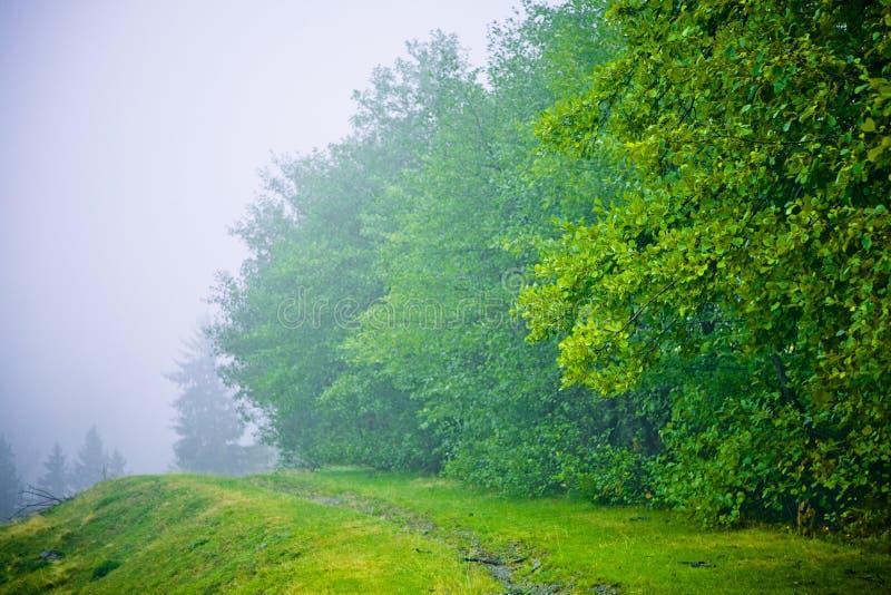 валы тумана бука стоковые фотографии rf
