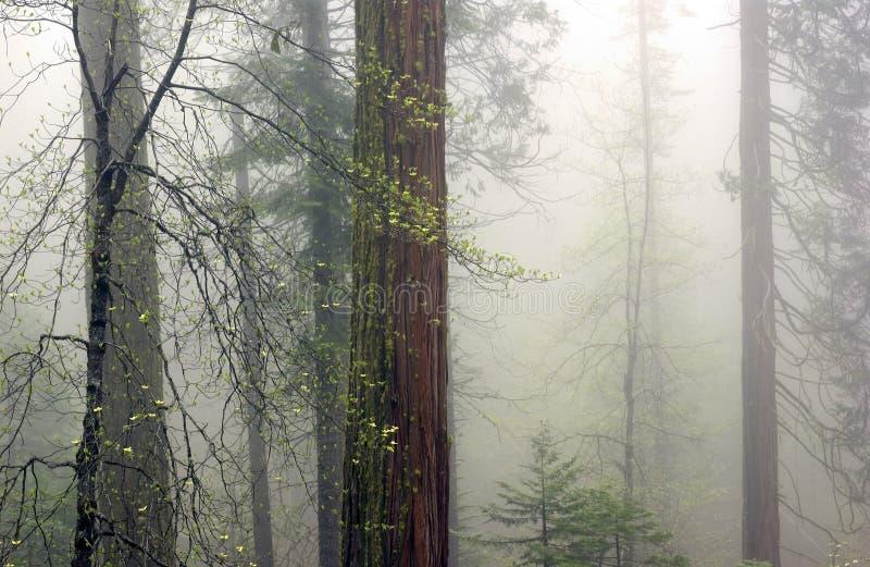 Download валы тумана стоковое фото. изображение насчитывающей green - 484714