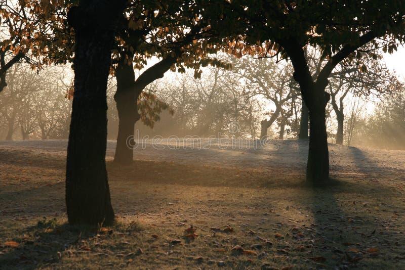 валы утра стоковое изображение rf