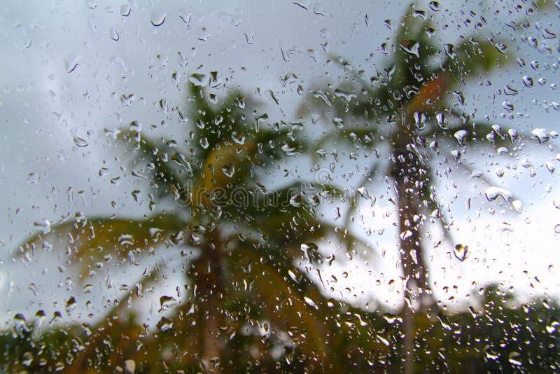 валы шторма ладони урагана тропические стоковое фото