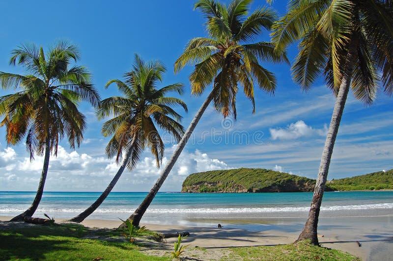 валы sagesse ладони la острова Гренады пляжа стоковые фотографии rf