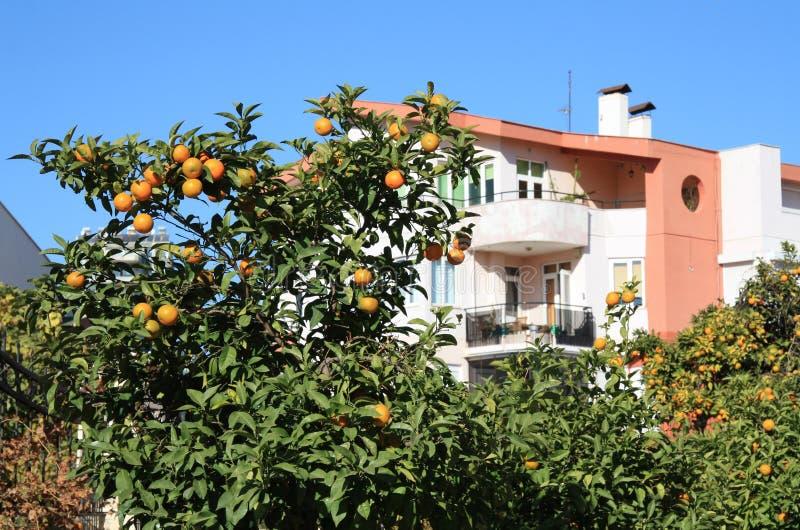 валы tangerine стоковая фотография rf