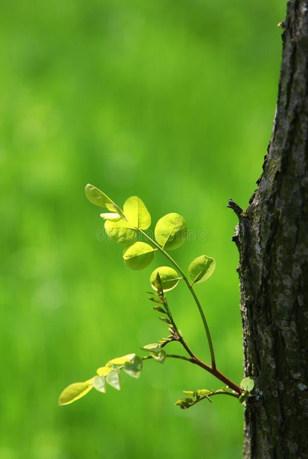 вал весны листьев стоковые фотографии rf