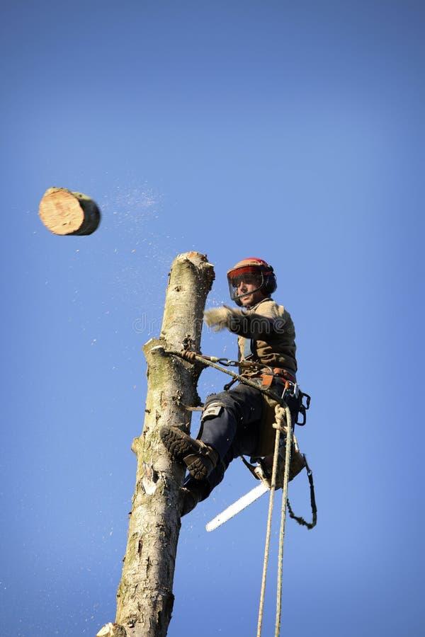 вал вырезывания arborist стоковые фотографии rf