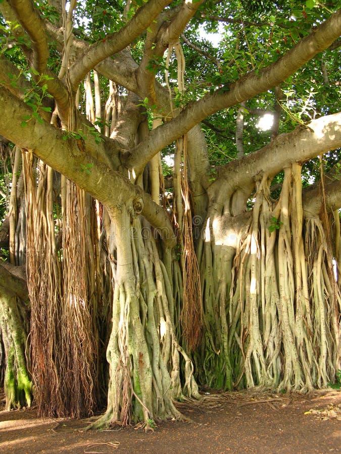 вал джунглей стоковое изображение