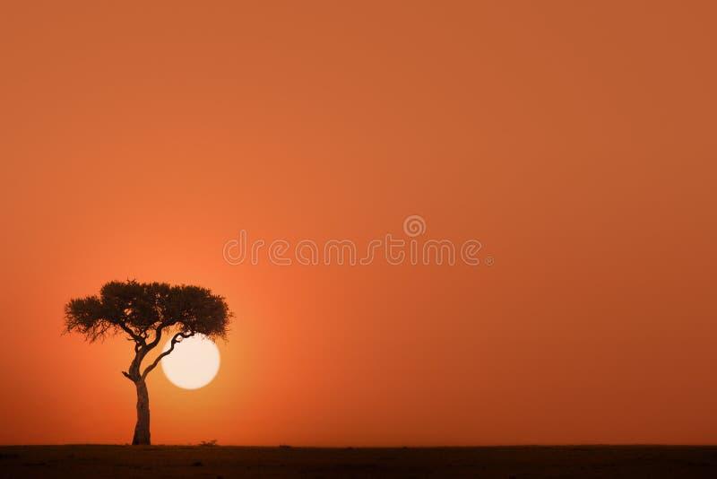 вал захода солнца акации стоковое фото