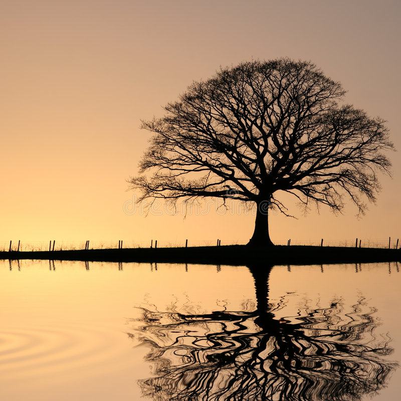 вал захода солнца дуба стоковая фотография