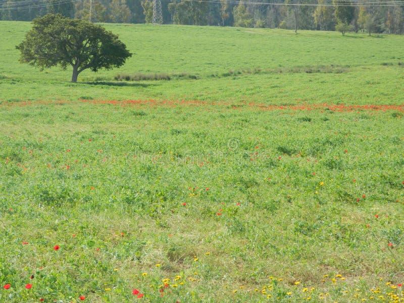 вал зеленого цвета травы стоковое изображение