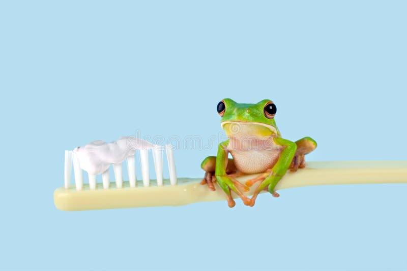 вал зубной щетки лягушки стоковые изображения