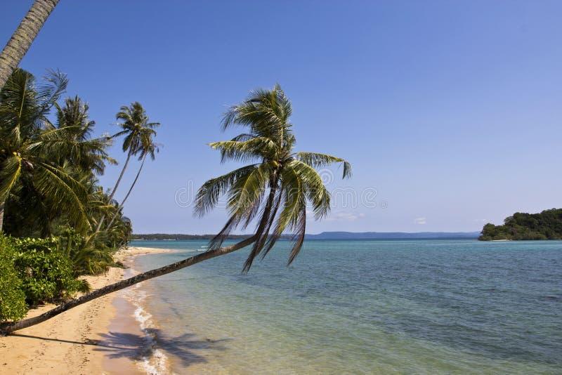 вал кокоса пляжа длинний стоковые изображения rf