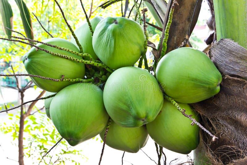 вал кокоса стоковые фото