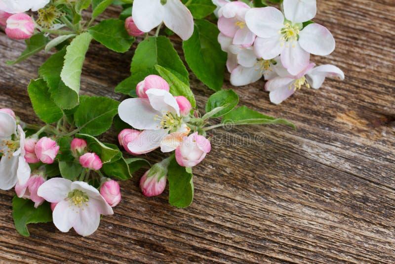 вал конца цветения яблока вверх стоковые фотографии rf