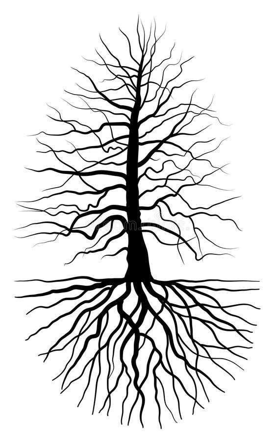вал корня иллюстрация штока