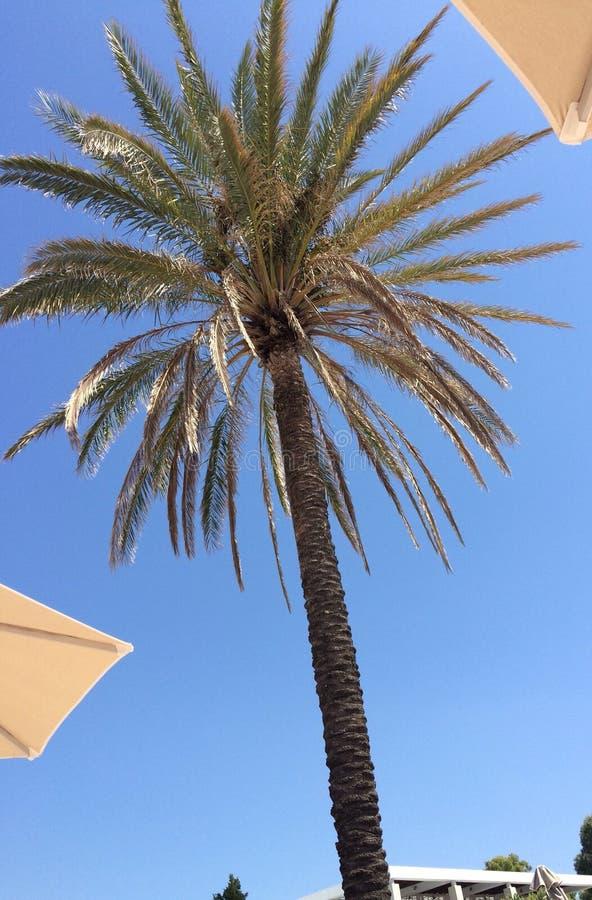 вал ладони острова Корсики среднеземноморской принятый съемкой стоковая фотография rf