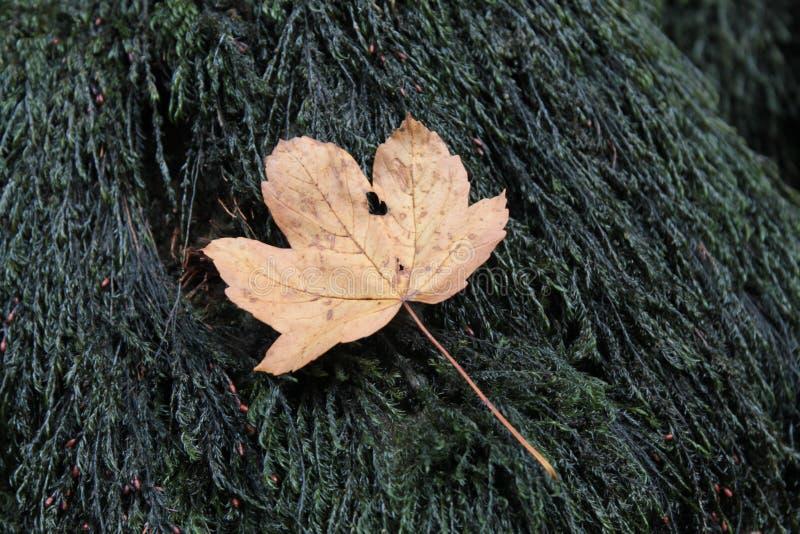 вал листьев осени стоковые изображения