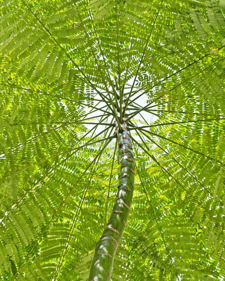 вал листьев сени стоковые фото