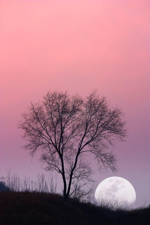 вал луны стоковые изображения