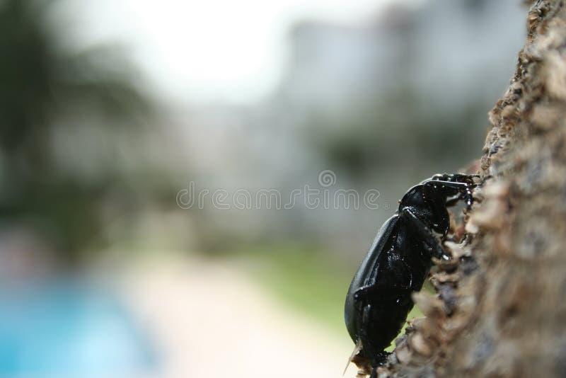вал насекомого стоковая фотография