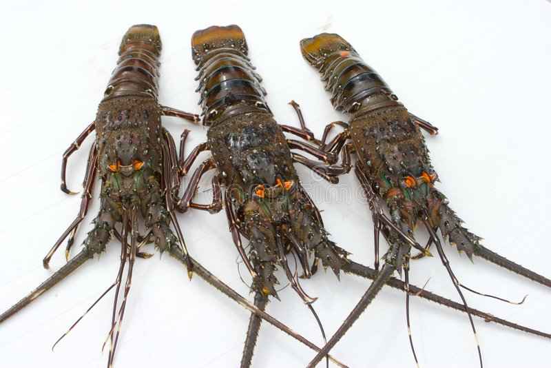 вал омаров стоковые изображения