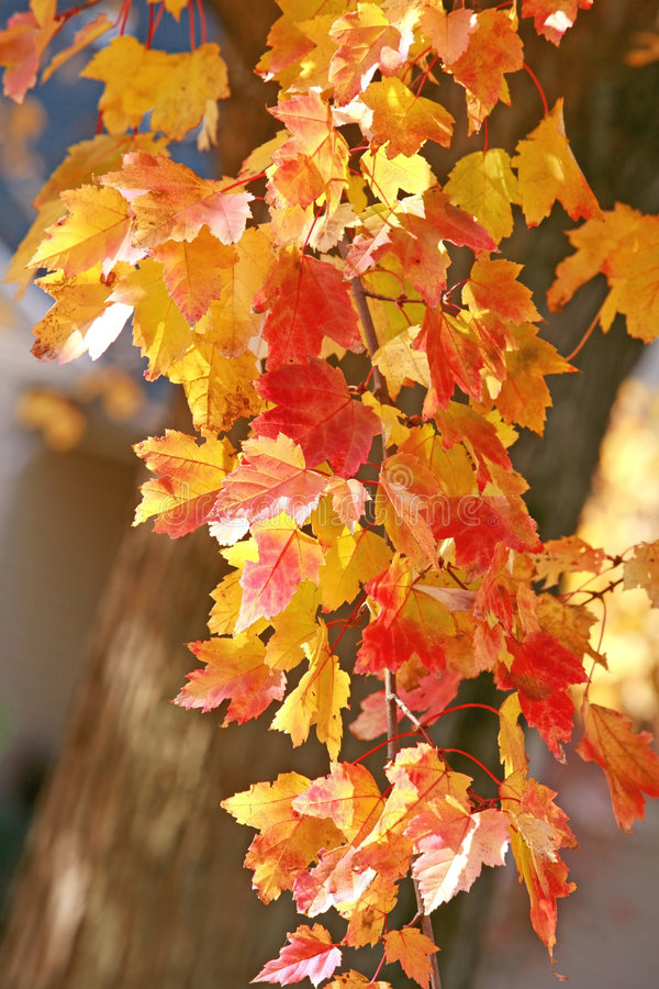 вал осени красивейший стоковое изображение rf