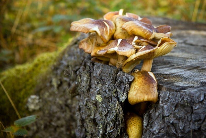 вал пня грибов стоковое изображение