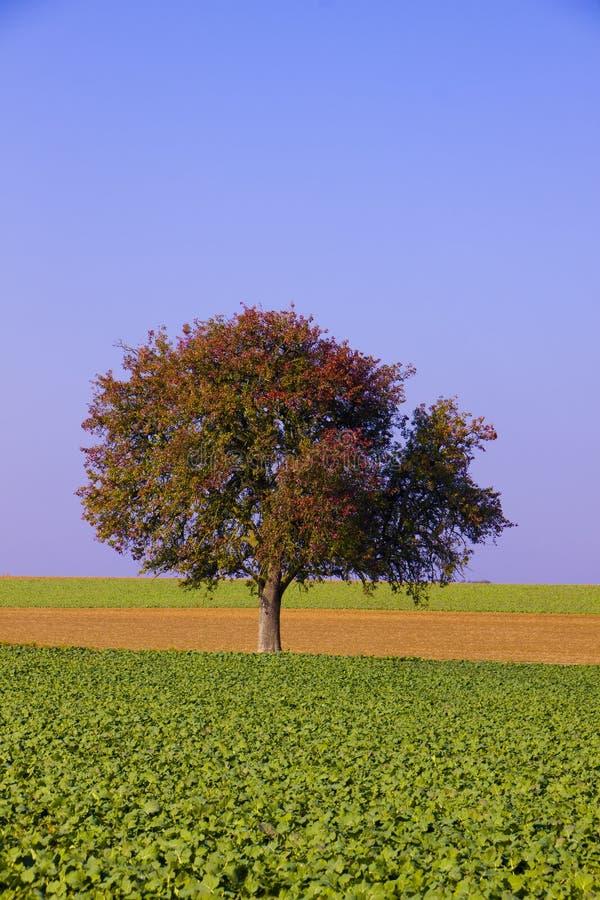 вал полей фермы уединённый стоковое изображение