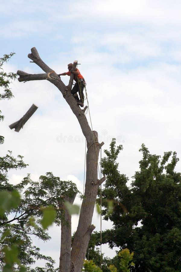 вал последовательности вырезывания arborist стоковая фотография
