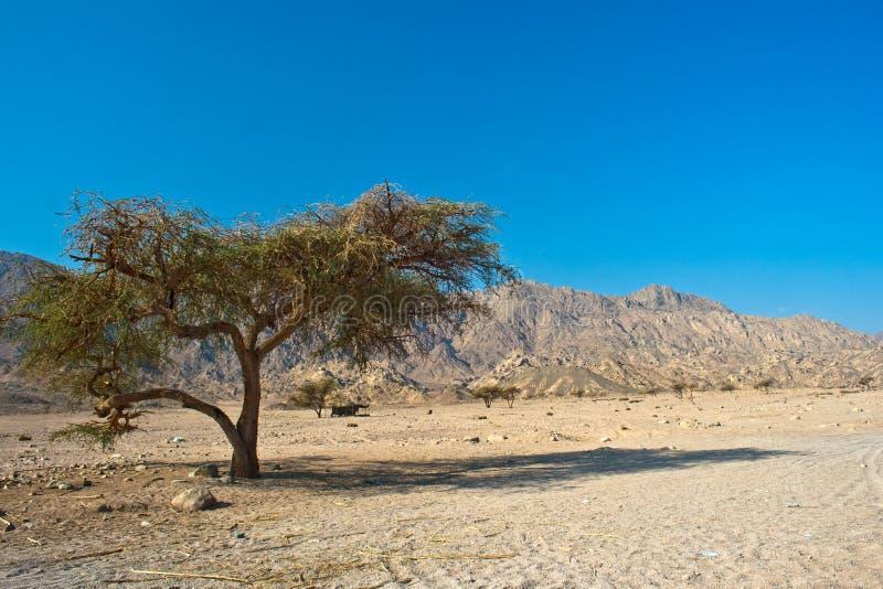вал пустыни сиротливый стоковые фото