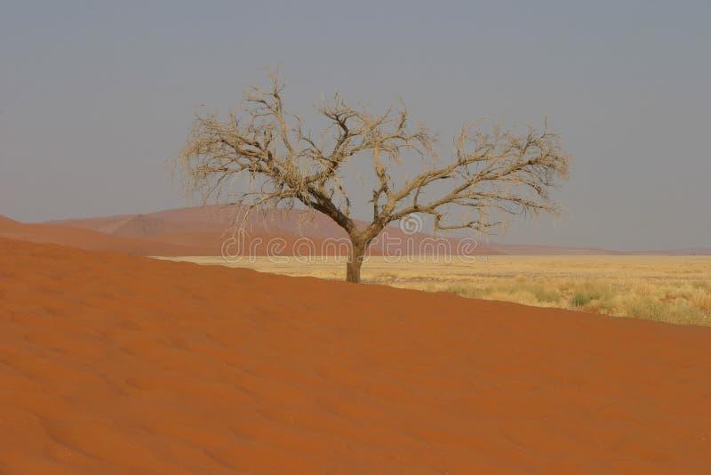 вал пустыни стоковые изображения rf