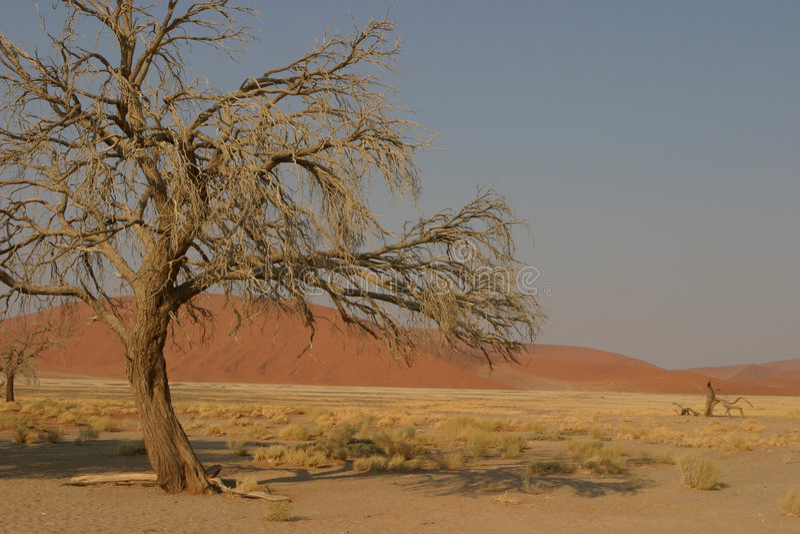 вал пустыни стоковое изображение