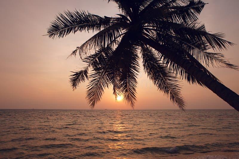 вал силуэта ладони кокоса стоковое фото rf