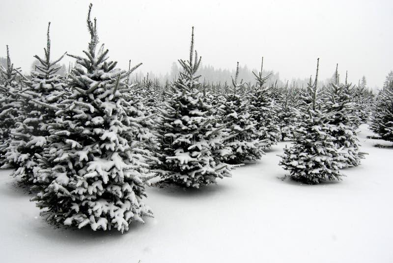 вал снежка фермы стоковые изображения rf
