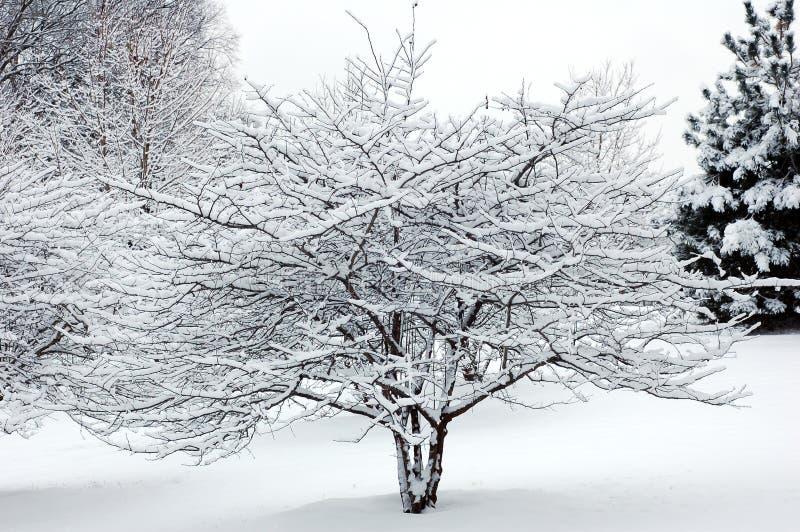 вал снежка стоковые изображения