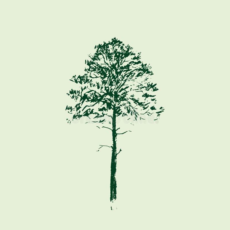 вал сосенки озера baikal предпосылки Линия чертеж Зеленые цветы Эскиз нарисованный рукой также вектор иллюстрации притяжки corel иллюстрация вектора