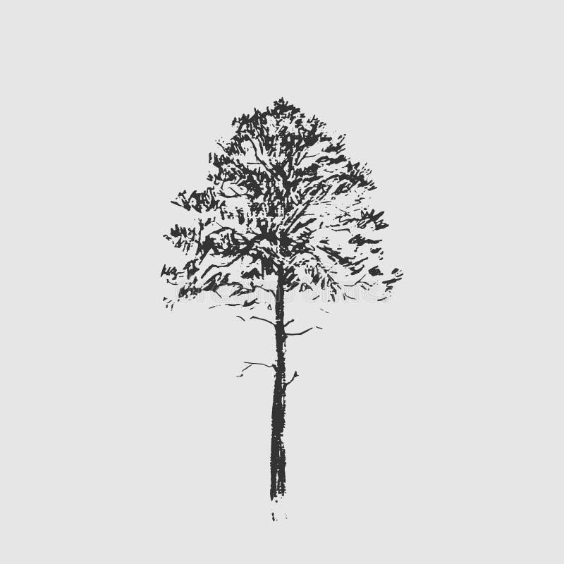 вал сосенки озера baikal предпосылки Черная линия чертеж изолированный на свете - серой предпосылке Нарисованная рукой иллюстраци бесплатная иллюстрация